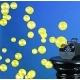 Ultravioletinis burbulų mašinų skystis 1L